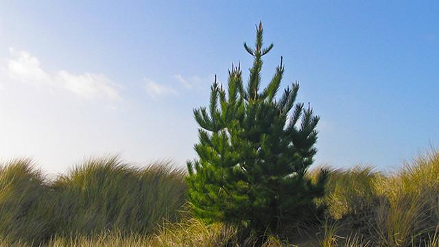 lone_pine